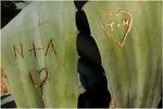 Dornige Liebe