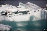 Auf der Eisscholle