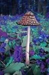 Pilz im Zauberwald