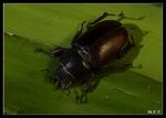 Käfer 5