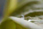 Wasserperle