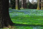 Frühlingserwachen unter alten Bäumen