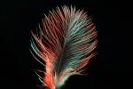 Vogelfeder rot-grün