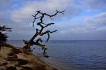 Baumtorso Ostsee