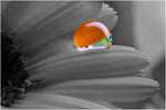 Regentropfen auf einer Blume