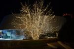 Beleuchteter Baum vor modernem Gebäude