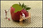 Erdbeerzeit - es gibt viel zu tun