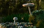 Pilze mit Spinne