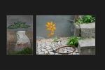 In jedem grauen Winkel kann eine zarte Blume wachsen